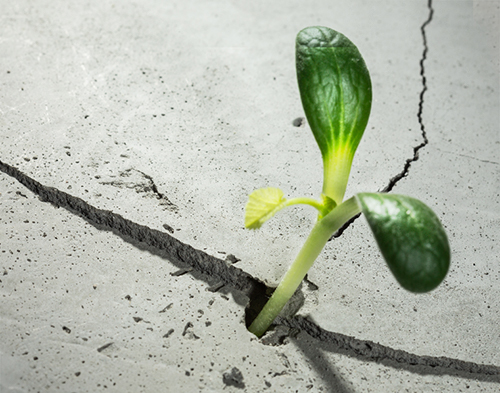 new growing life from concrete